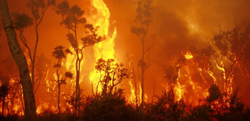 bushfire emergency response